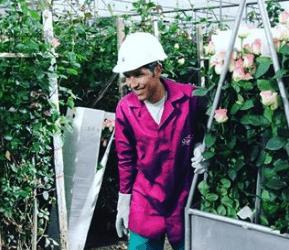 Rosas Preservadas Ecuatorianas